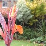 Flowers in October at Cransley Garden