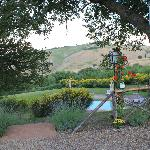 A view from the olive grove