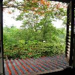 Looking out of the upstairs bedroom window.