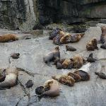  Sea Lions