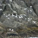  Seabird Rookery