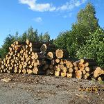 Logging activity
