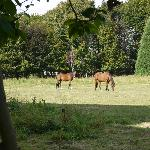  Horses on the Grounds of the Manoir