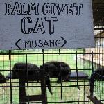 Palm civet cats sleeping in their cage