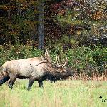 Cataloochee Valley Tours- Day Tours