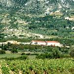 Photo of Kefalonian Robola Wine Cooperative
