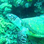 Turtle we saw on the dive