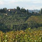  View of the vineyards from &quot;Castello della Paneretta&quot;