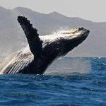 Whale Watching once in a lifetime