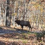 Lone Elk Park