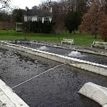  Allentown Fish Hatchery