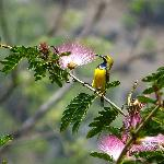 Sunbird in hotel garden