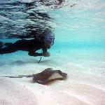 snorkelling with a stingray