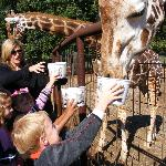 Fun feeding the giraffes