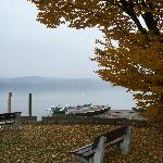  Misty day on Reichenau Island, Baden-Wurttemburg, Germany