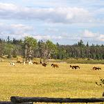  Horses grazing just off the back deck