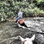 Centaura- Day Horseback Riding Tours