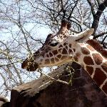 African Servalcat Safaris Private Day Tours