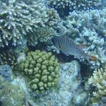  Banana Reef, North Male Atol 01/11/2012