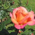  Hermosas rosas en el jardn