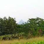 View of Bhimashankar hills from the farm