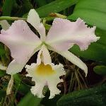 One of many beautiful orchids