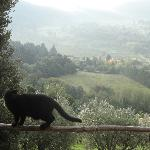 Bed and Breakfast Il Fornaccio Foto