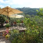  The terrace surrounded by citrus trees