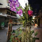 Beautifull flowers on the streetside