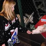 my daughter feeding one of Santa's deer