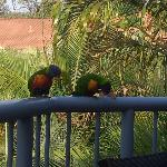 Our morning breakfast visitors