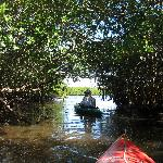 canoing the mangroves