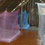 Mosquito nets covering the beds.