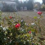Flowers blooming in the Fall? Beautiful, Loved & cared for by Owner.