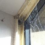  Spider web and spider above bed