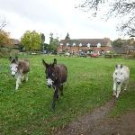 Foto di Highfield Farm Guest House