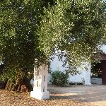 Masseria Brancati