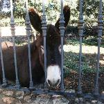  Hee haw! Friendly burros await