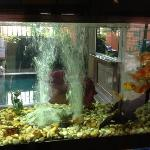  Fish tank in lobby