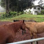 Horse kept at the Ranch, with Cottage in the background.