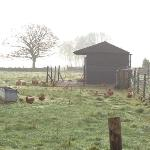 chickens at Endmoor Farm