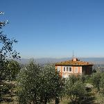 View from the olive grove