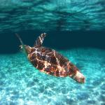 Sea Turtle shot with GoPro