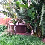 oasis under the banana trees