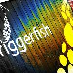 Triggerfish Brewing