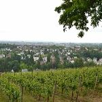  view of vineyard and Wiesbaden