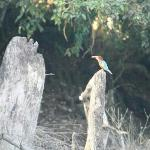 finally the kingfisher escapes the mallyas