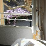  Room view on giantess wisteria