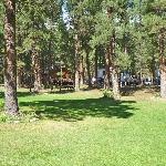Nestled in 10 acres of old growth Ponderosa pine trees!