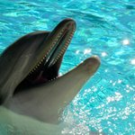 Φωτογραφία: SeaWorld Adventure Park San Diego